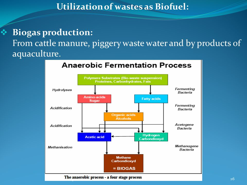 Utilization of wastes as Biofuel:  Biogas production: From cattle manure, piggery waste water and by products of aquaculture.