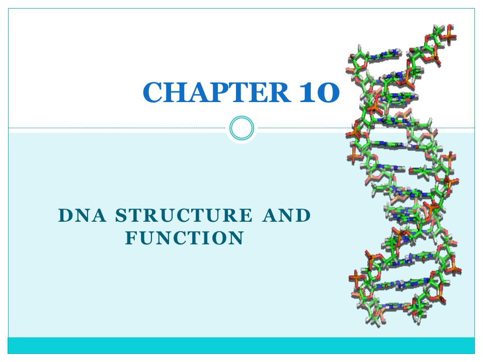 DNA REPLICATION THE SEQUENCE