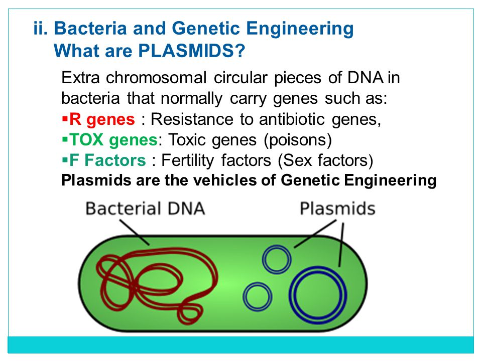 ii. Bacteria and Genetic Engineering What are PLASMIDS.