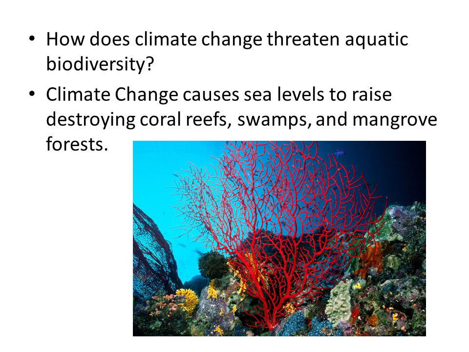 How does climate change threaten aquatic biodiversity? Climate Change causes sea levels to raise destroying coral reefs, swamps, and mangrove forests.