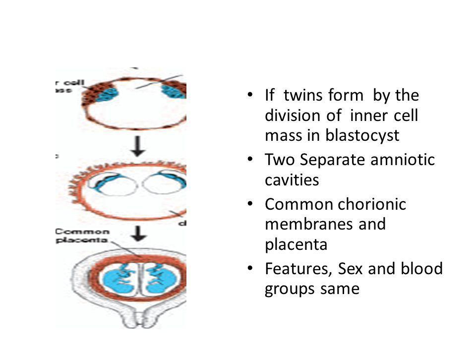 If twins form by the division of inner cell mass in blastocyst Two Separate amniotic cavities Common chorionic membranes and placenta Features, Sex an
