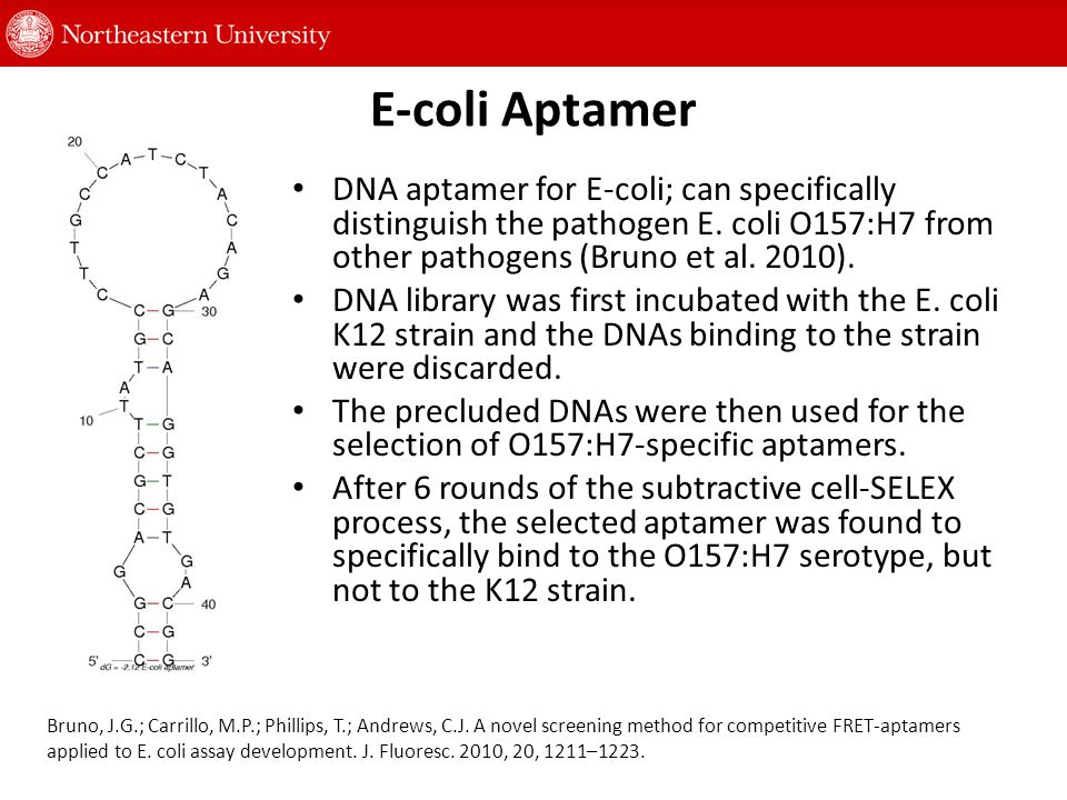 E-coli Aptamer DNA aptamer for E-coli; can specifically distinguish the pathogen E.