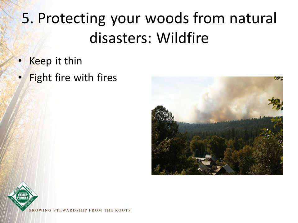 5. Protecting your woods from natural disasters: Wildfire Keep it thin Fight fire with fires