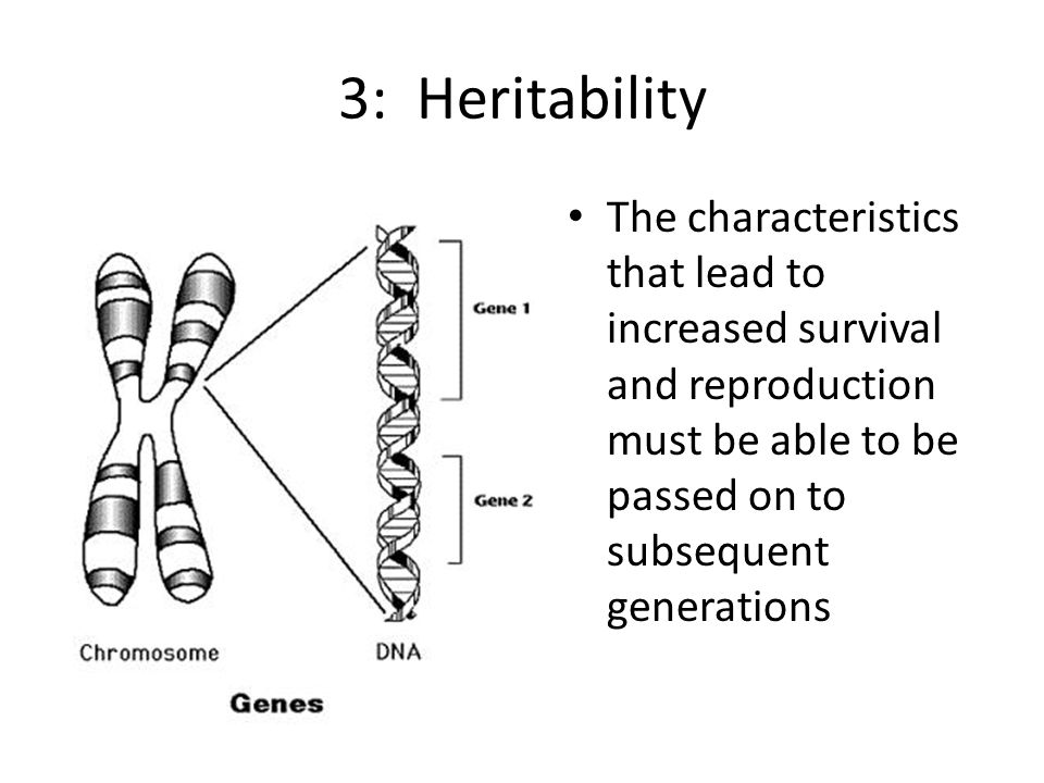 3: Heritability The characteristics that lead to increased survival and reproduction must be able to be passed on to subsequent generations
