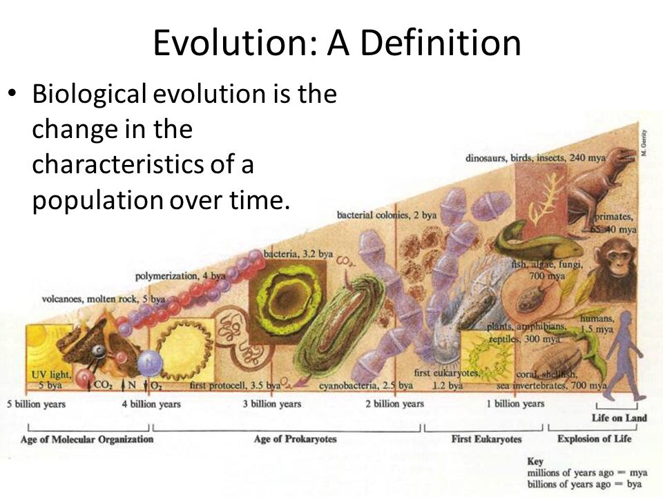 Evolution: A Definition Biological evolution is the change in the characteristics of a population over time.