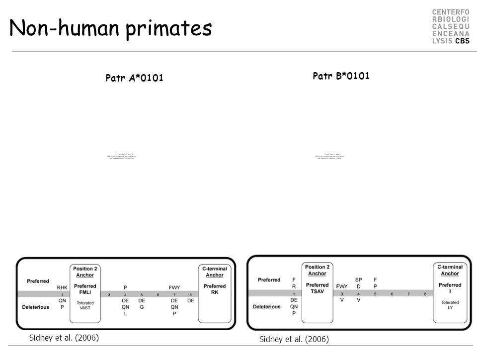 Non-human primates Sidney et al. (2006) Patr A*0101 Patr B*0101