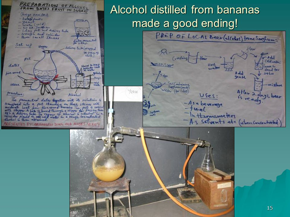 15 Alcohol distilled from bananas made a good ending!