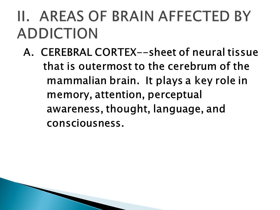 A. CEREBRAL CORTEX--sheet of neural tissue that is outermost to the cerebrum of the mammalian brain. It plays a key role in memory, attention, percept