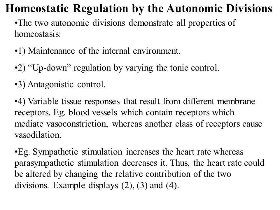 Homeostatic Regulation by the Autonomic Divisions The two autonomic divisions demonstrate all properties of homeostasis: 1) Maintenance of the interna