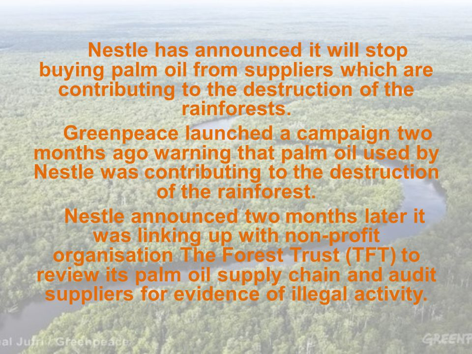 Nestle has announced it will stop buying palm oil from suppliers which are contributing to the destruction of the rainforests.