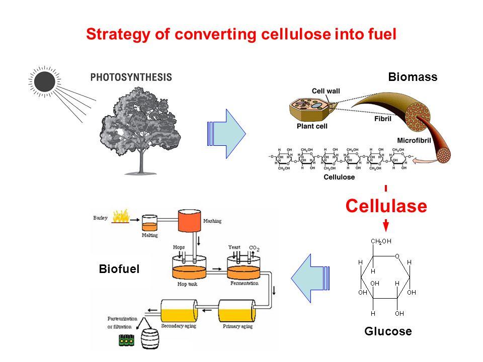 Cellulase improvement-improved cellulase binding