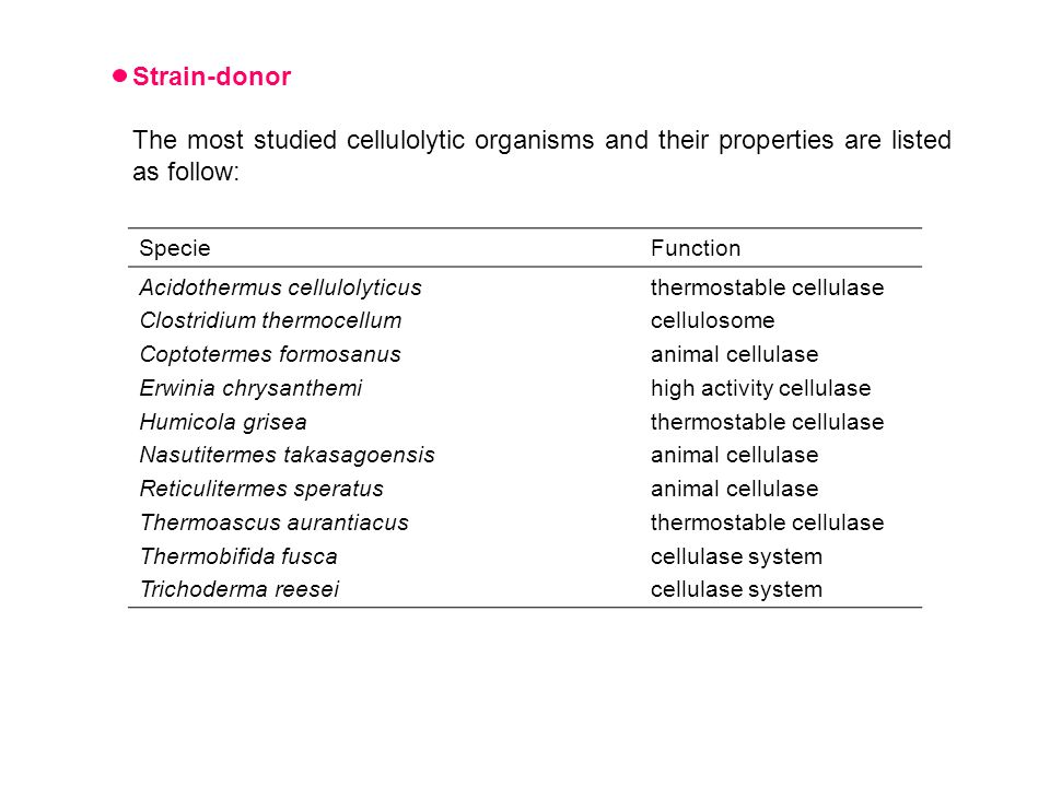 Strain-donor The most studied cellulolytic organisms and their properties are listed as follow: SpecieFunction Acidothermus cellulolyticus Clostridium thermocellum Coptotermes formosanus Erwinia chrysanthemi Humicola grisea Nasutitermes takasagoensis Reticulitermes speratus Thermoascus aurantiacus Thermobifida fusca Trichoderma reesei thermostable cellulase cellulosome animal cellulase high activity cellulase thermostable cellulase animal cellulase thermostable cellulase cellulase system