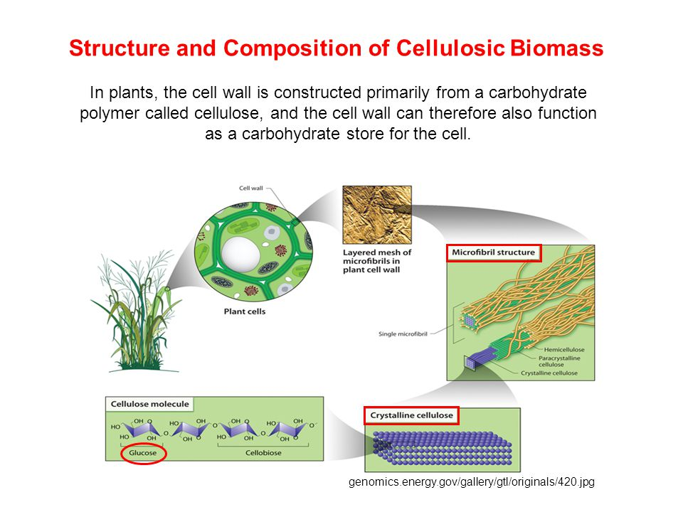 Components of cellulase systems Cellulases are distinguished from other glycoside hydrolases by their ability to hydrolyze  -1, 4-glucosidic bind between glucosyl residues.