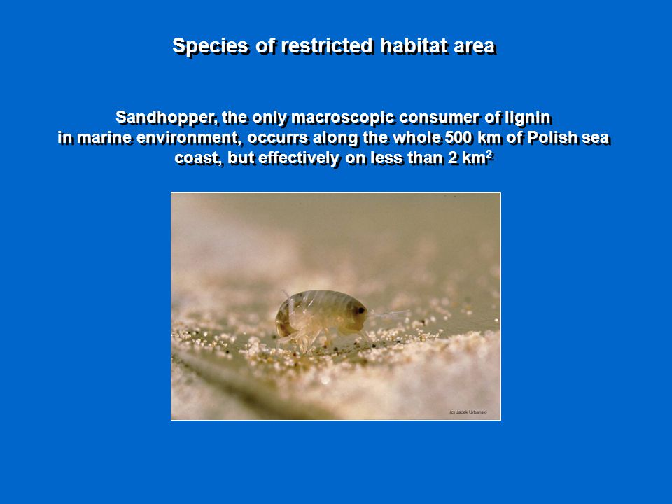 Species of restricted habitat area Sandhopper, the only macroscopic consumer of lignin in marine environment, occurrs along the whole 500 km of Polish