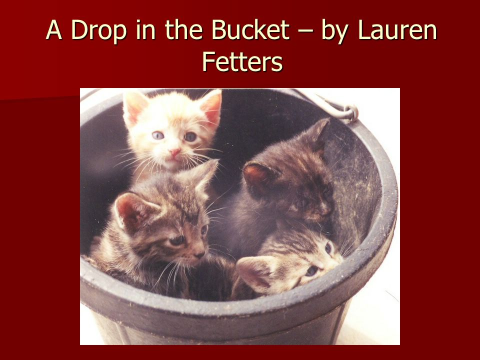 A Drop in the Bucket – by Lauren Fetters