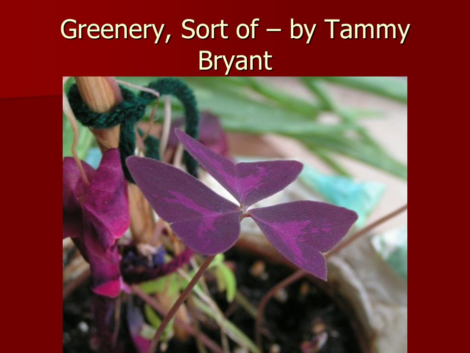 Greenery, Sort of – by Tammy Bryant