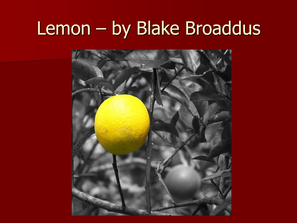 Lemon – by Blake Broaddus