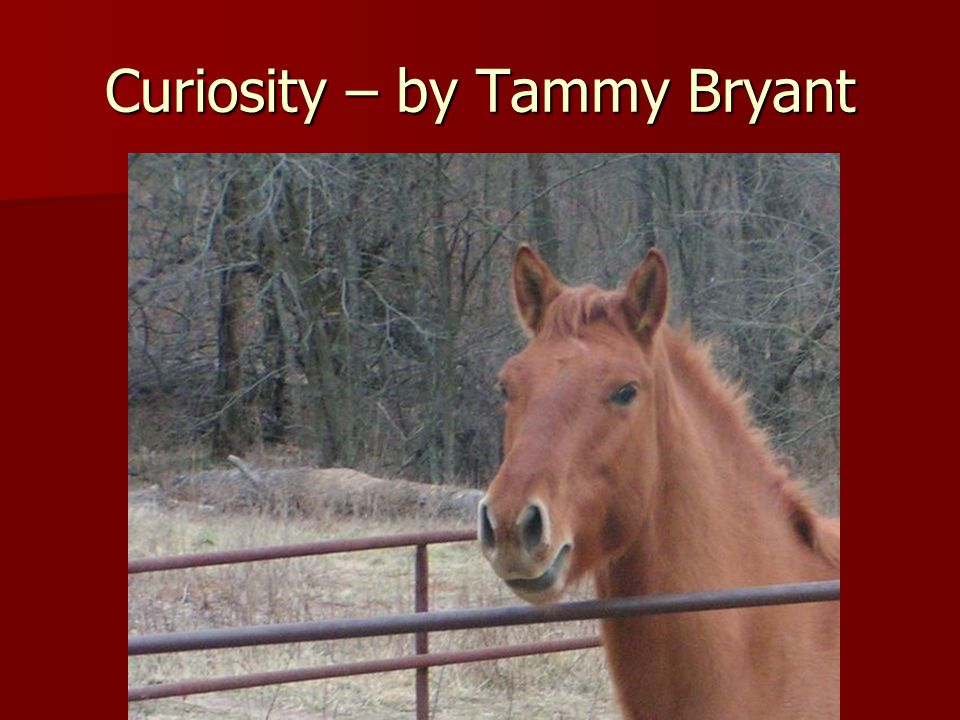 Curiosity – by Tammy Bryant