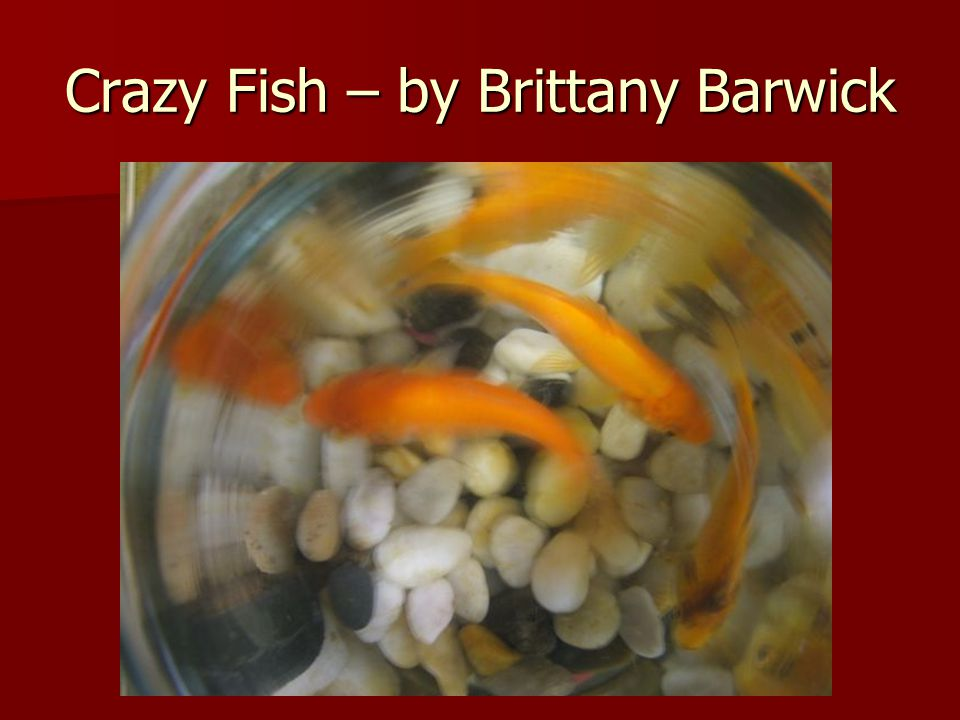 Crazy Fish – by Brittany Barwick
