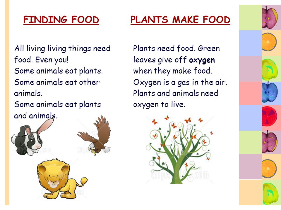 FINDING FOOD All living living things need food. Even you! Some animals eat plants. Some animals eat other animals. Some animals eat plants and animal