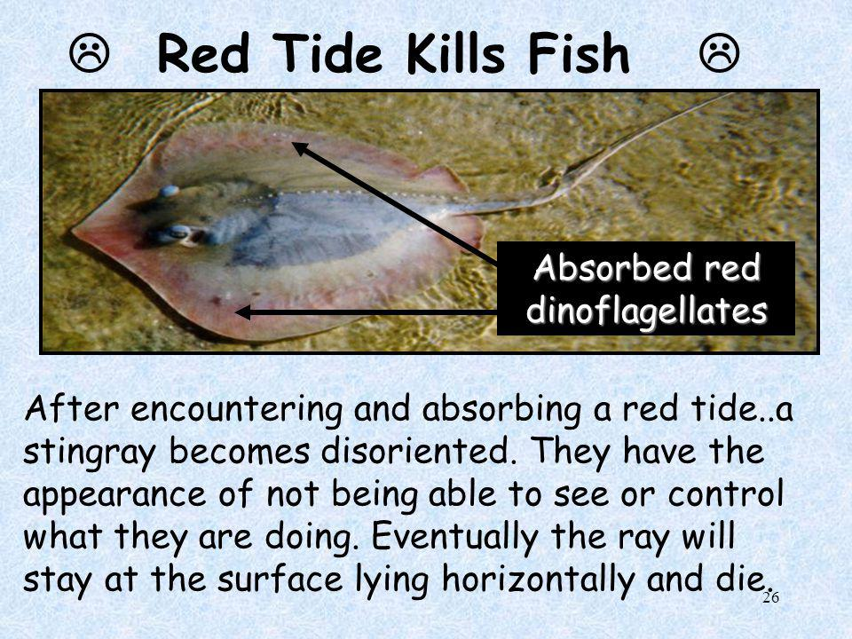25  Red Tide 