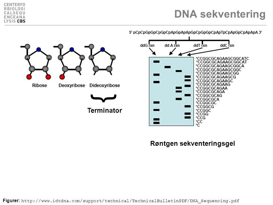 DNA sekventering Figurer: http://www.idtdna.com/support/technical/TechnicalBulletinPDF/DNA_Sequencing.pdf } Terminator Røntgen sekventeringsgel