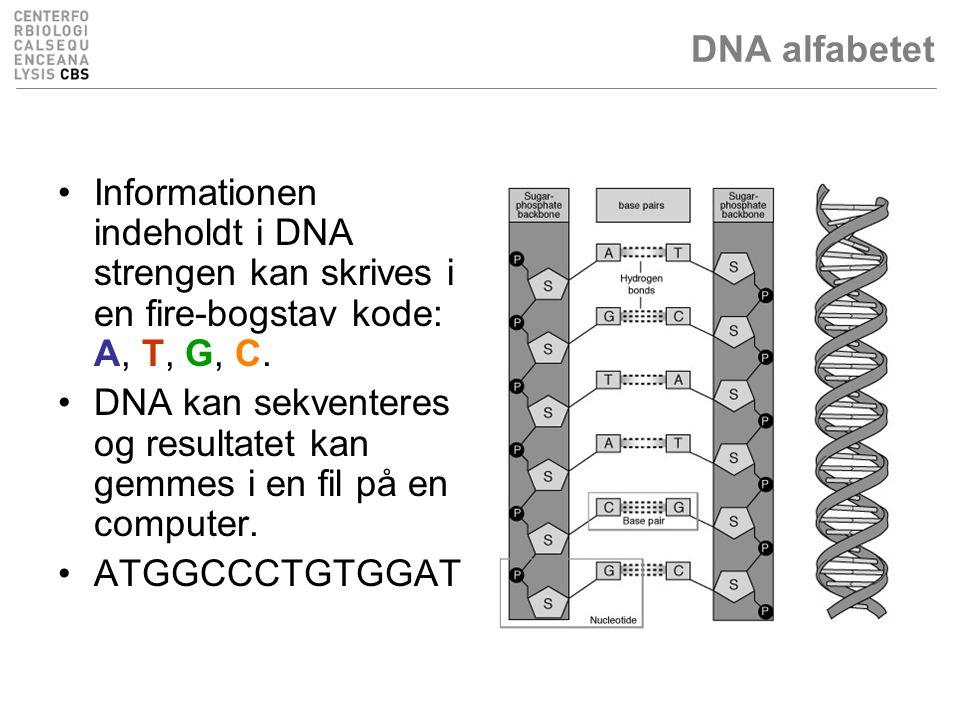 DNA alfabetet Informationen indeholdt i DNA strengen kan skrives i en fire-bogstav kode: A, T, G, C.