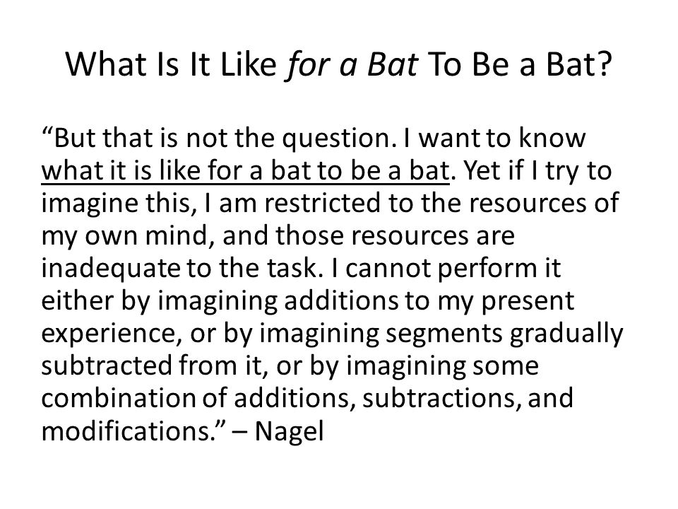 What Is It Like for a Bat To Be a Bat. But that is not the question.