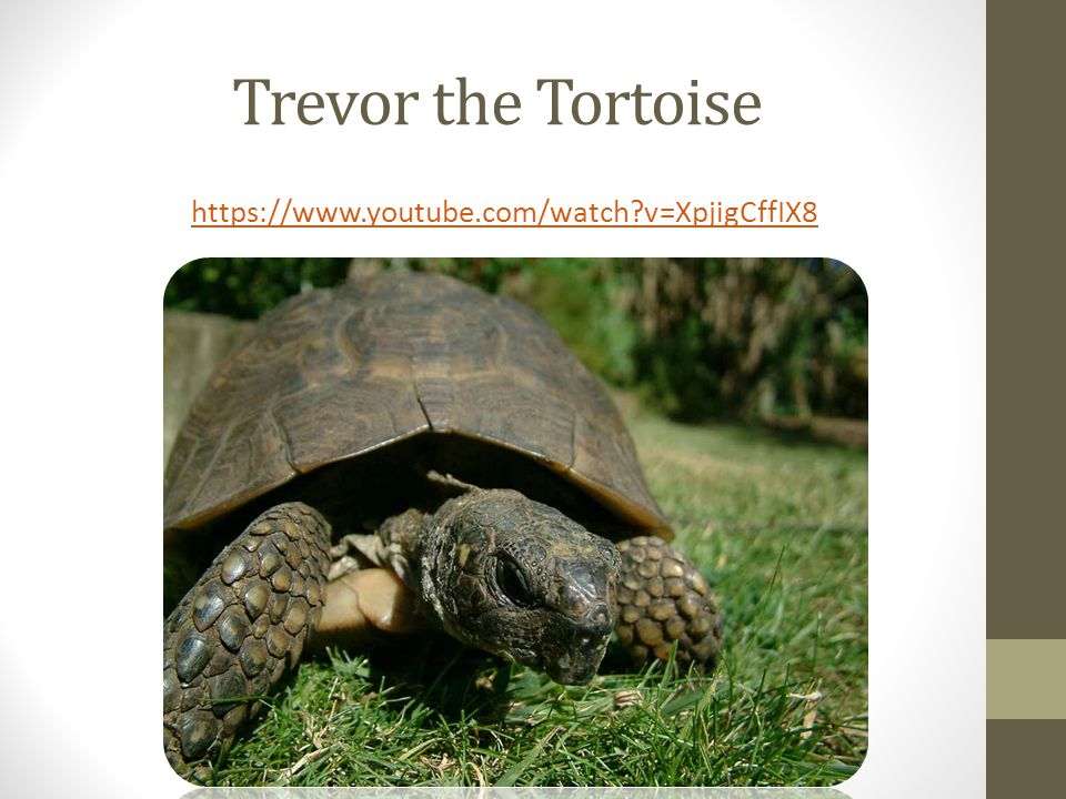 Trevor the Tortoise https://www.youtube.com/watch?v=XpjigCffIX8