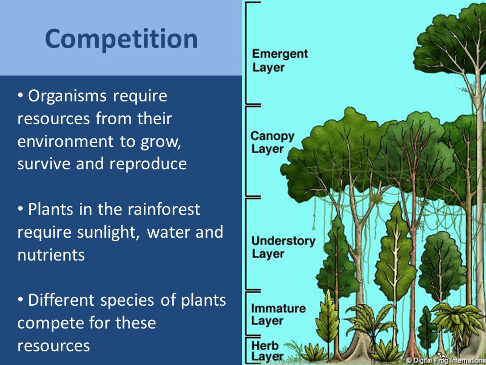 Reduce competition by specializing Eats invertebrates in the sediment of the lake bottom Eats plankton that swim in open water of the lake = Niche differentiation
