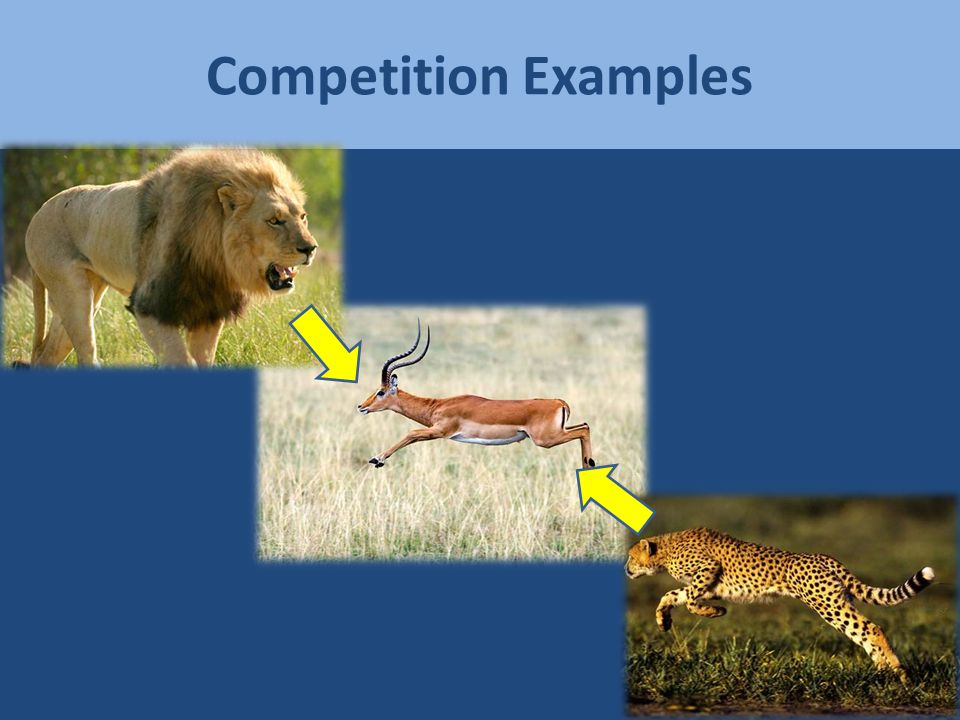 Competition: The Game Species A vs.