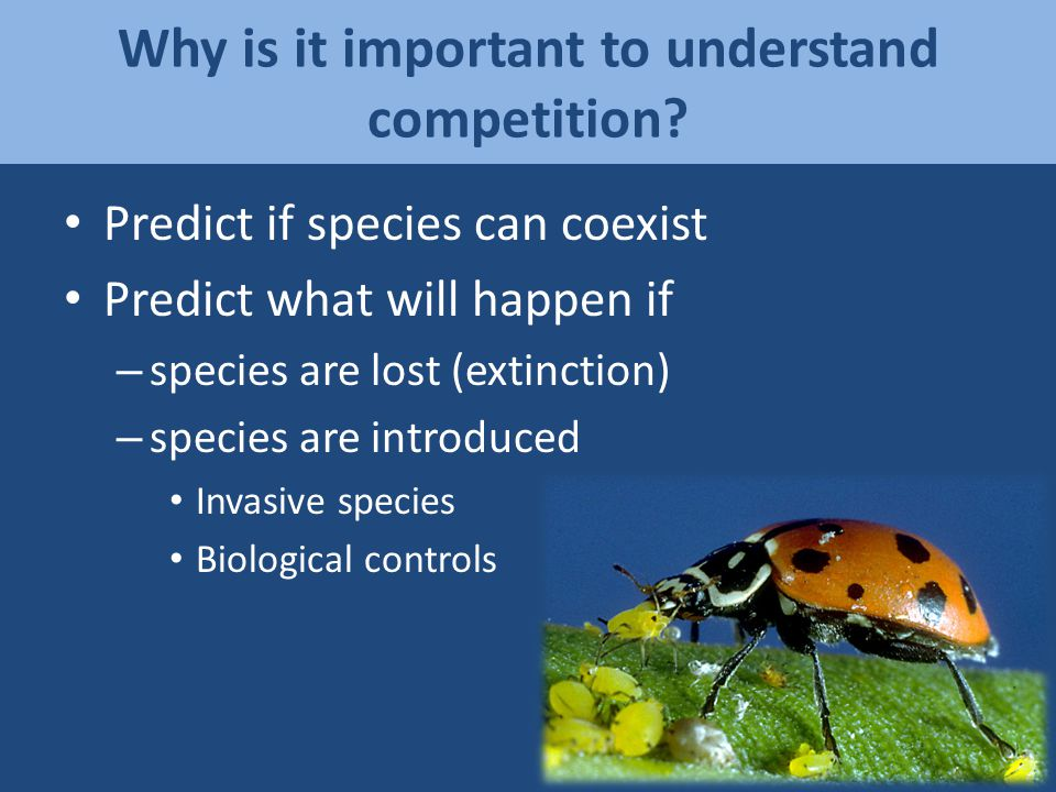 Environmental Change = Competition Change If global warming decreased rainfall, how would that affect plant competition.