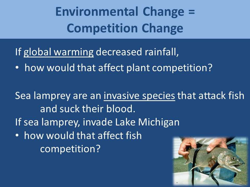 Environmental Change = Competition Change If global warming decreased rainfall, how would that affect plant competition? Sea lamprey are an invasive s