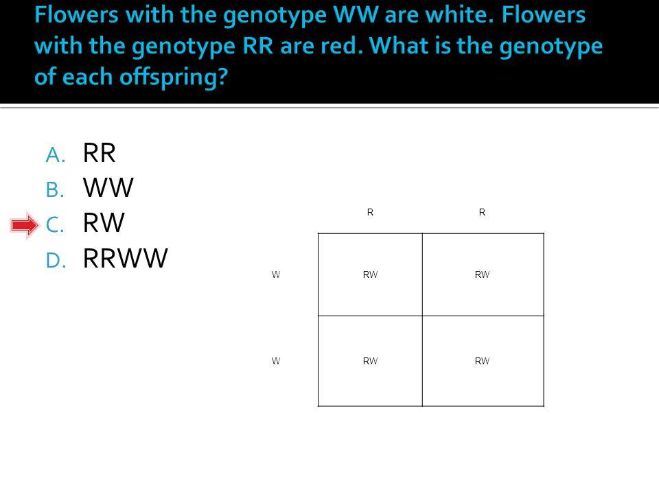 A. RR B. WW C. RW D. RRWW RR WRW W