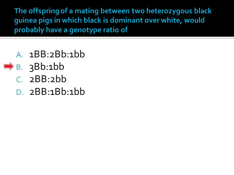 A. 1BB:2Bb:1bb B. 3Bb:1bb C. 2BB:2bb D. 2BB:1Bb:1bb