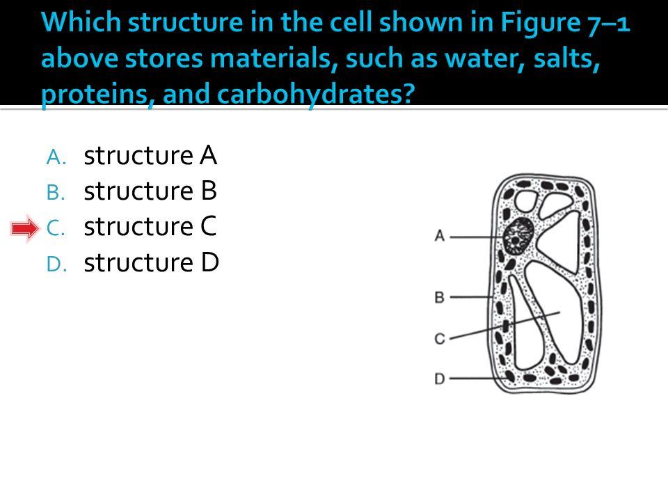 A. structure A B. structure B C. structure C D. structure D