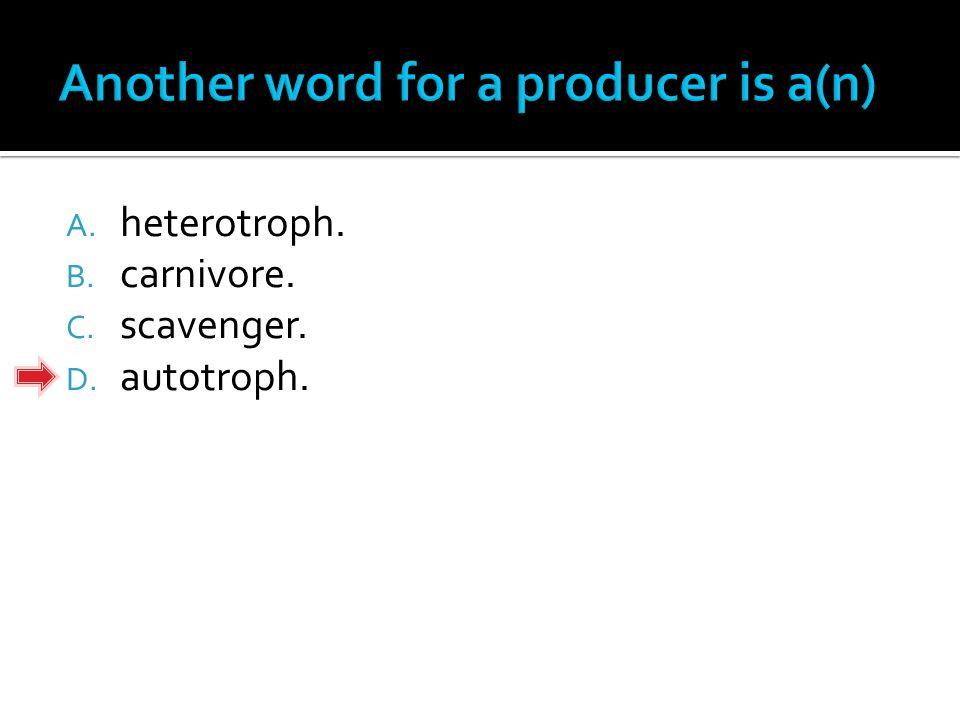 A. heterotroph. B. carnivore. C. scavenger. D. autotroph.