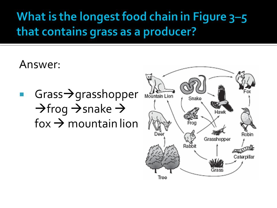 Answer:  Grass  grasshopper  frog  snake  fox  mountain lion
