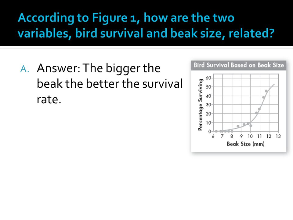 A. Answer: The bigger the beak the better the survival rate.
