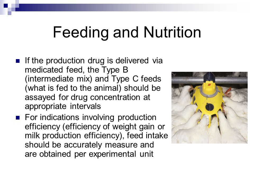 If the production drug is delivered via medicated feed, the Type B (intermediate mix) and Type C feeds (what is fed to the animal) should be assayed for drug concentration at appropriate intervals For indications involving production efficiency (efficiency of weight gain or milk production efficiency), feed intake should be accurately measure and are obtained per experimental unit Feeding and Nutrition
