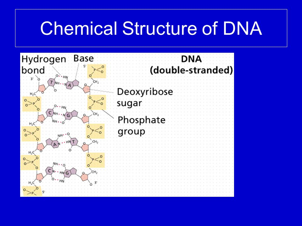 What is DNA composed of.