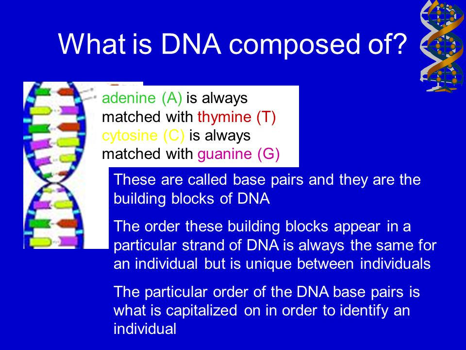 AATTGCCTTTAAAAT Way to describe a piece of DNA The DNA code, or genetic code is passed through sperm and egg from the parents to the offspring Locus: Location in DNA strand