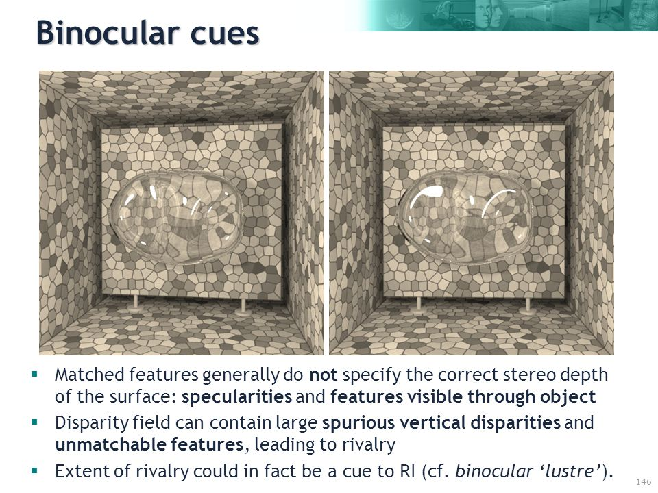 146 Binocular cues  Matched features generally do not specify the correct stereo depth of the surface: specularities and features visible through object  Disparity field can contain large spurious vertical disparities and unmatchable features, leading to rivalry  Extent of rivalry could in fact be a cue to RI (cf.