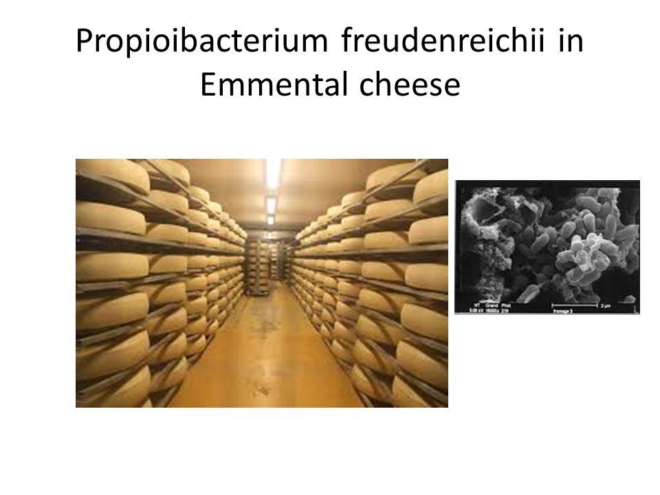 Propioibacterium freudenreichii in Emmental cheese
