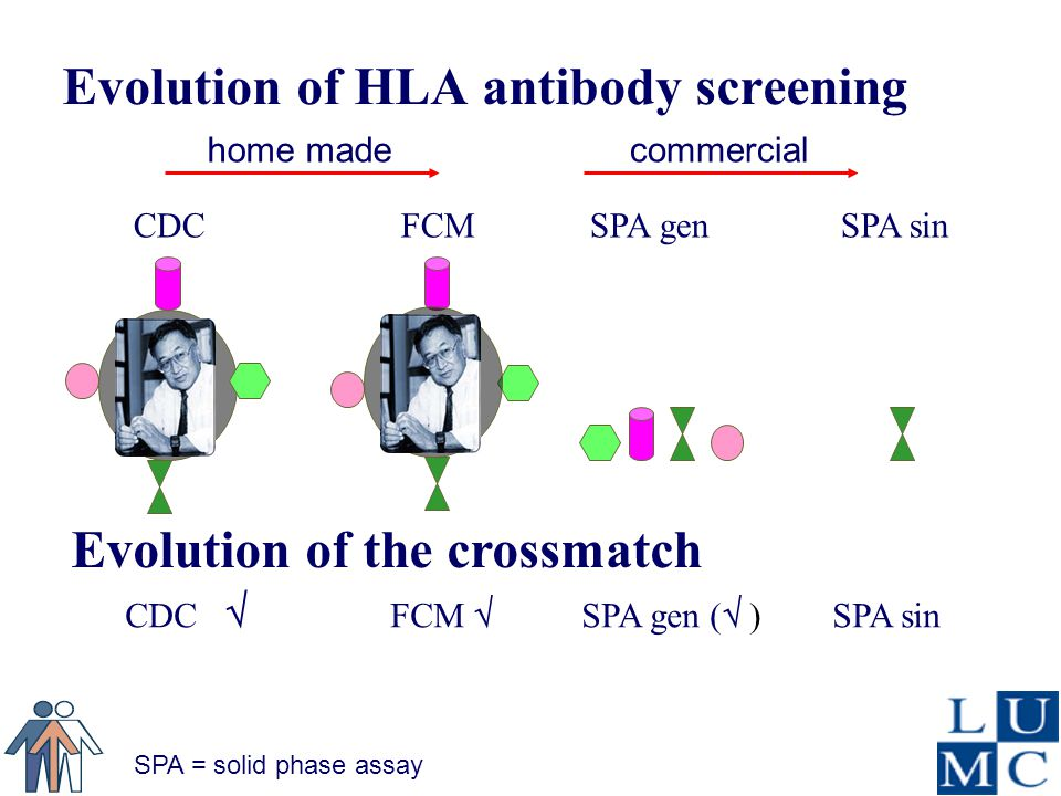 Evolution of HLA antibody screening commercialhome made SPA = solid phase assay Evolution of the crossmatch CDC FCM SPA gen SPA sin CDC  FCM  SPA gen (  ) SPA sin