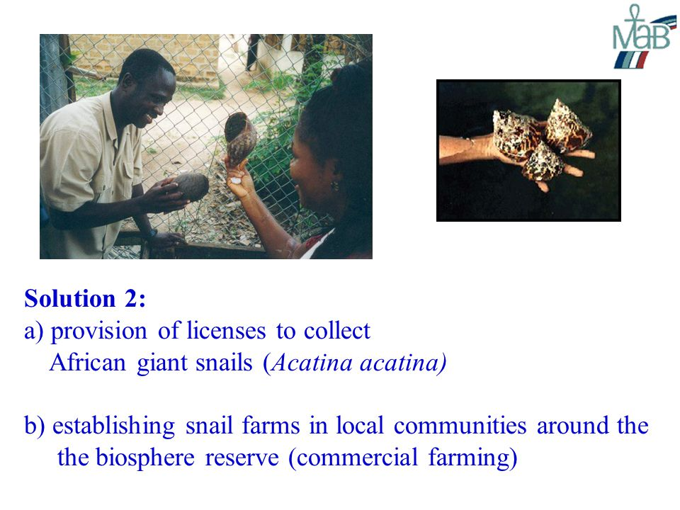 Solution 2: a) provision of licenses to collect African giant snails (Acatina acatina) b) establishing snail farms in local communities around the the biosphere reserve (commercial farming)