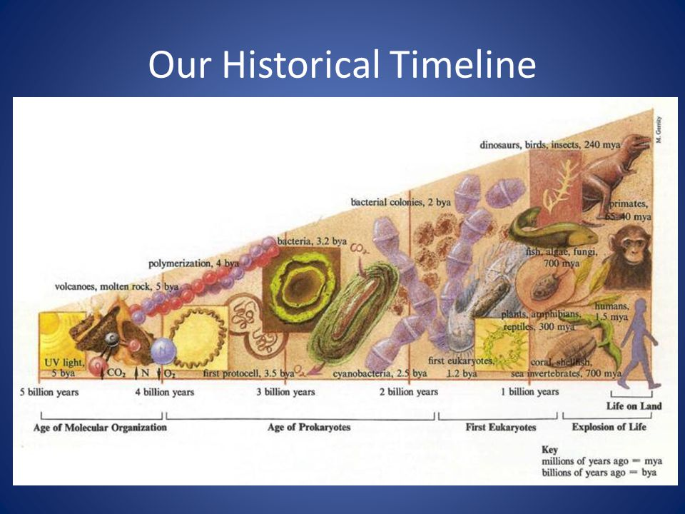 Our Historical Timeline