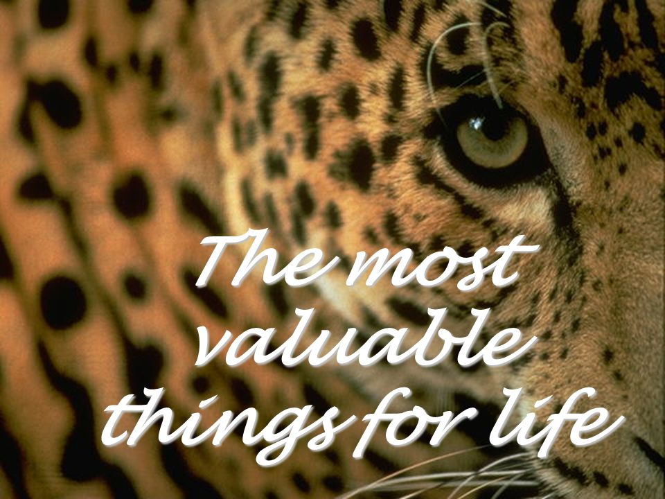 The most valuable things for life