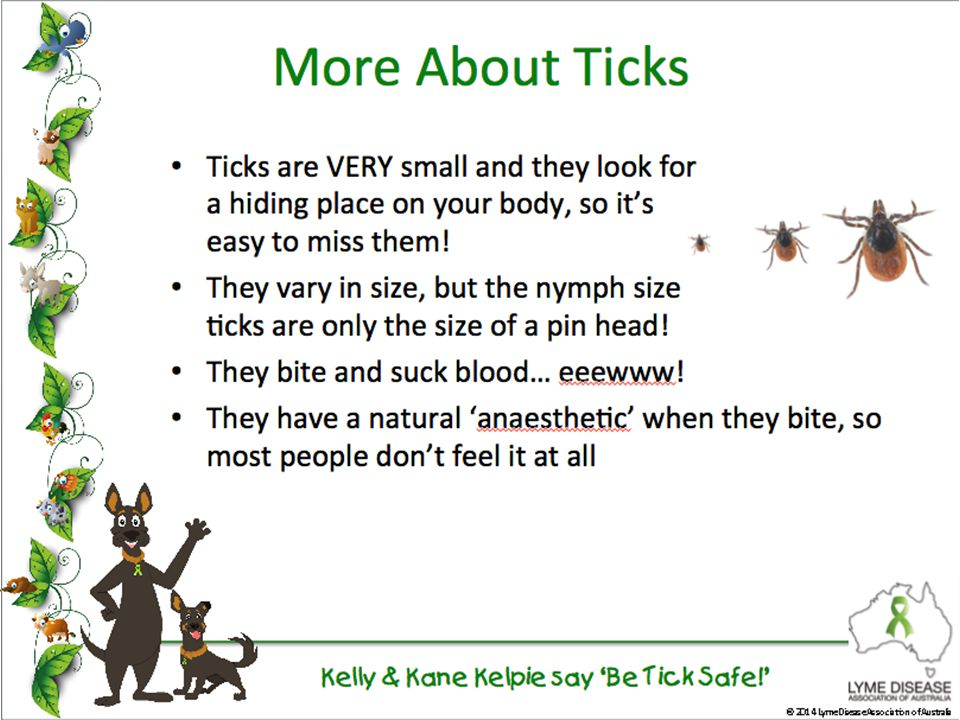 Kelly & Kane Kelpie say 'Be Tick Safe!' © 2014 Lyme Disease Association of Australia