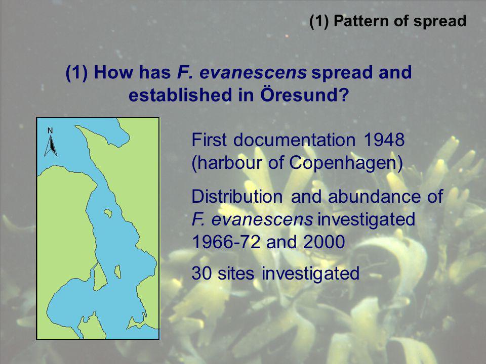 (1) How has F. evanescens spread and established in Öresund? First documentation 1948 (harbour of Copenhagen) Distribution and abundance of F. evanesc